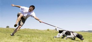 Dogs are primal hunters and must be kept active on a daily basis. Image-myactivedog.com
