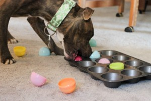 Play games like fetch with your pet or hide its favorite treats and encourage it to find them. Activities that lead them to think, use their senses and focus their brains are greatly beneficial in channelizing their energy in the right direction. Image: animal-instincts.ca