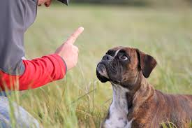 Using gestures to communicate with dogs is an effective way to bond with the canine. Image: http://shv-kiel.de/