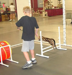 Use your cat's favorite treat to reward her for completing each hurdle. http://www.catagility.org/