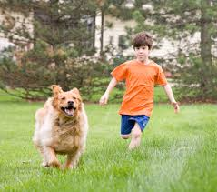 Dogs as a species hunt for their food in wild thus keeping dogs physically active is very important. Playing fetch and outdoor running with your dog will also increase your bonding with the canine. Image -epochtimes.com