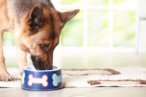 If extra snacks, treats or table  scraps are added  to the diet,  their  energy content   must be taken  into account  when calculating  the daily food allowance,  In  addition,  spaying may  reduce the  resting  energy requirement to bitches. Regular weighing of the animal allows the owner to monitor the adequacy of the feeding regimen on a quantitative basis. Image-www.dogfoodinsider.com