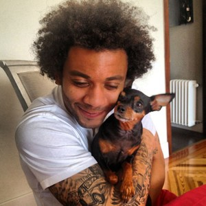 7.Marcelo Vieira: This Brazilian footballer is a Real Madrid defender and a great dog lover. He owns a Newfoundland named Lola, Kiara & Ully the French bulldogs, a British Bulldog called Thiag, Bella, a miniature Pinscher, and Nalla the Labrador. Images: http://realmadridfamily.tumblr.com