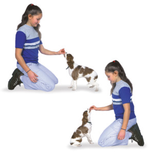 Asking your dog to first 'Sit' and letting him wait a little for a loving pat is the right way to greet and meet you or any guest. Image - AKC.org