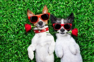 Animal-lovers who are singles, are flocking towards online dating websites that serve pet-owners only in the hope of mingling with like-minded people! Image - www.gizmodo.in/indiamodo/
