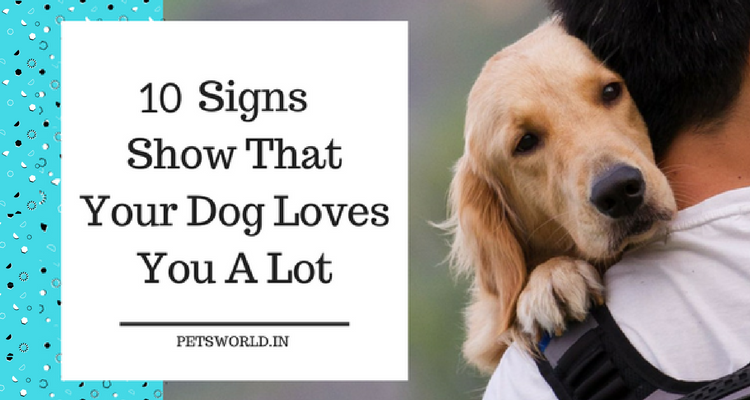 10 Signs Dogs Show Love 1.1