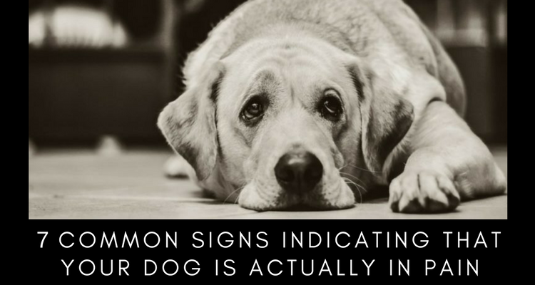7 Common Signs Indicating That Your Dog Is Actually In Pain