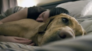Image (dog sleeping on bed) https://www.rover.com