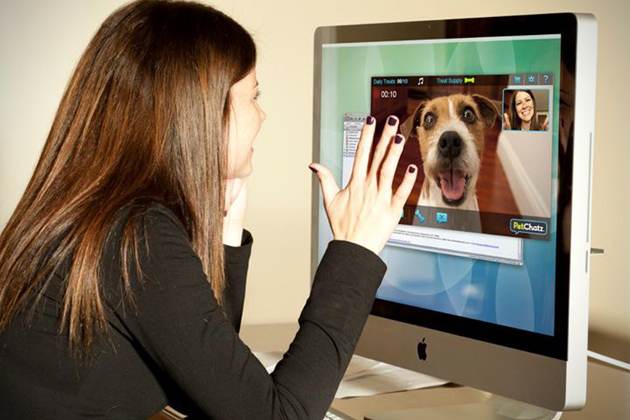 Video chat with your dog
