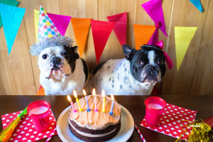 Image (Dog Birthday) http://www.yours.co.uk/