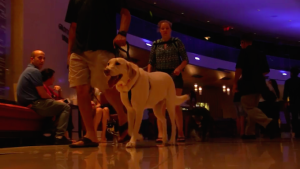 . The hotel made sure pets were given top priority so that the already distressed families did not have to face the heartwrenching dilemma of leaving behind/abandoning their furry mates. Image-www.lifedaily.com/