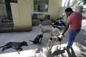 Reports of the shelter facing shortage of funds, the salaries of ancillary staffers being withheld for as much as seven months, food scarcity and lack of medicines for animals have surfaced. Image: HT India