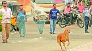 Stray dogs being caught.