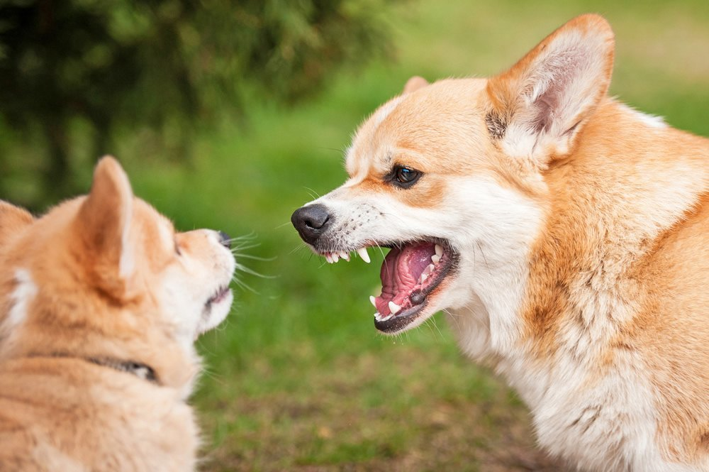Small Dog Aggression Towards Other Dogs