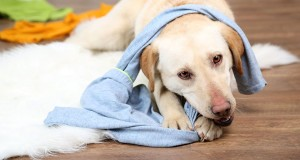 Also store your shoes, kid's toys, and dirty laundry in designated cabinets. Save your pooch from an electric shock by hiding electrical cords behind furniture or conceal them in a way your pet is unable to chew on them. Image-www.cesarsway.com