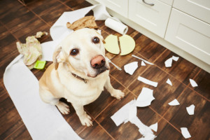 At one juncture we encourage healthy chewing but when a dog begins to mindlessly gnaw on your shoes, furniture, wires, hands & feet and walls it can make you pretty irritable and at the same time scared for your pup's health.Image -wagwooflove.com