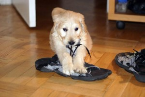 Teach your pet a new trick as this will help engage his/her mind healthily. Taking the dog for a walk also helps you to spend one on one time with it. Image-petcube.com