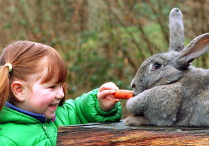 Sugary foods such as carrots, banana, pineapple etc. should be given in small quantities. Image - animalstime.com