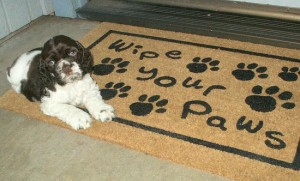 wipe the paws