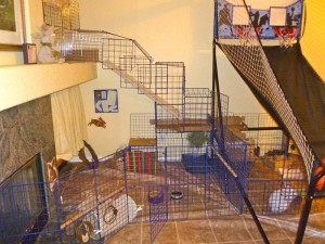 9. Clean the pet's personal space/living quarters daily. A clean housing guarantees a disease free pet.