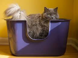 Some Possible reasons when cleanliness freaks don't wish to leave their litter boxes alone and ways to change this unhygienic behavior. Image - nvrmiss.com