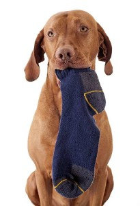 Trade in your garment with its favorite treat or toy. A play session with your pet at this point will help greatly in diverting its attention from your personal clothing. Image thehappypuppysite.com