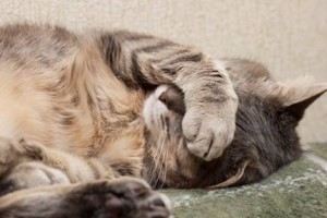 If your cat continues to hide and avoids greeting you when you return home from work, it is a clear sign that your kitty is upset due to pain or fear. Image - www.gentlejourneyaz.com/