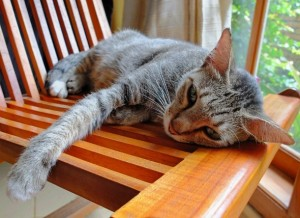 Prolonged lethargy means that a form of stress is making your cat languid. Image - www.petmd.com