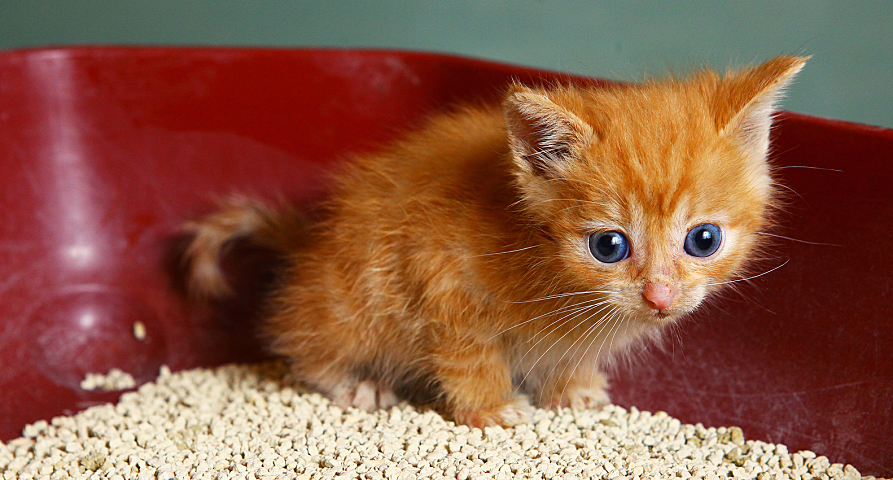 Would Another Cat Use Litter Box