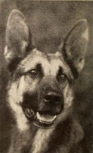 Strongheart (inset) was one of the earliest canine actors. Image -iheartdogs.com