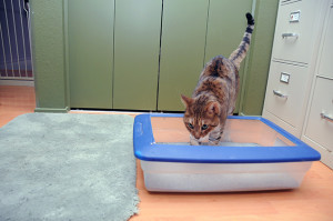 When you offer choices to the kitty it is likely to choose one box that makes it feel safe and comfortable eliminating in. Choose a safe corner for the box without letting it become the center of attention in a room. Image - www.sheknows.com