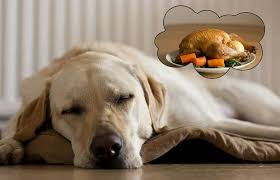 A recent research also suggests that animals less intelligent & simpler than dogs dream too. Image: nextgendog.com/