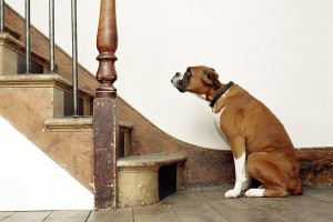 dog-hates-stairs-BF0505-001-resized-56a26a793df78cf772755e08