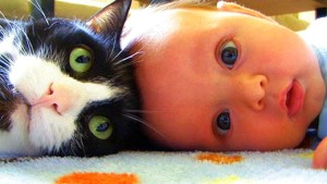 Cat and baby 2