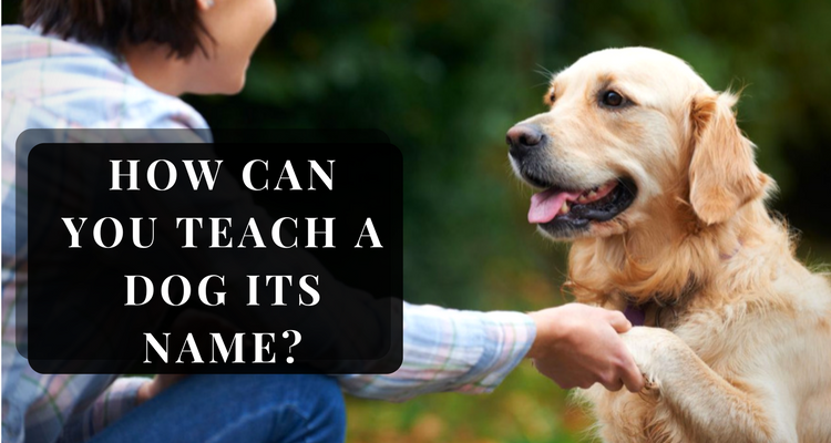 How to teach your dog its name