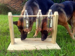 For dogs that like to leisurely solve puzzles even two holes would be enough to keep it happily engaged.   Fill some treats or a suitable quantity of kibbles in this bottle and secure its cap tightly. The toy is ready to roll and for your dog to enjoy !. Image Credit - Pinterest