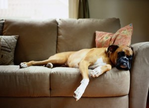 Also if your pooch has the habit of hogging the couch or your bed, it should be taught to move on a side and make space for you. Image https://pets.thenest.com