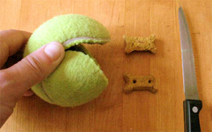 Slitting a used tennis ball and filling with your dog' favorite treat is sure shot way to entice the pooch, Image Credit - rover.com