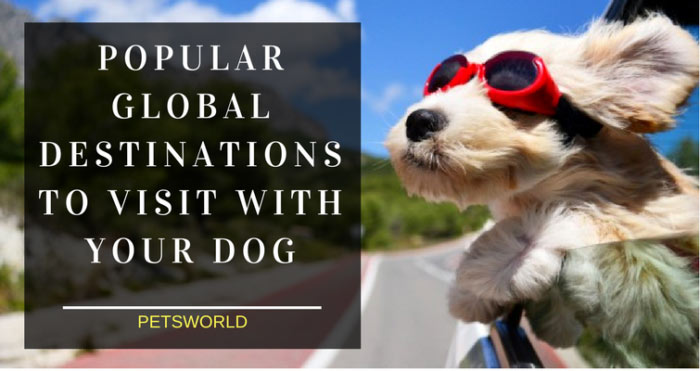 Popular Global Destinations to Visit with Your Dog