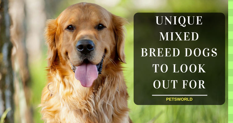 Unique-Mixed-Breeds-To-Look-Out-For