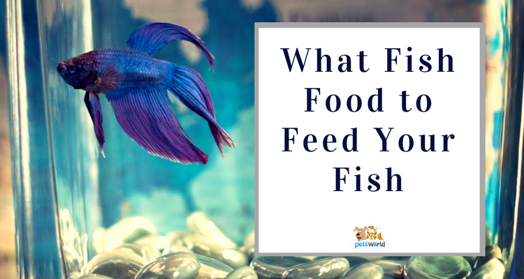 Fish Food Feed