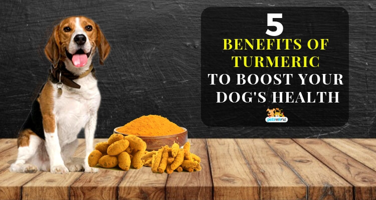 Benefits Of Turmeric for pets