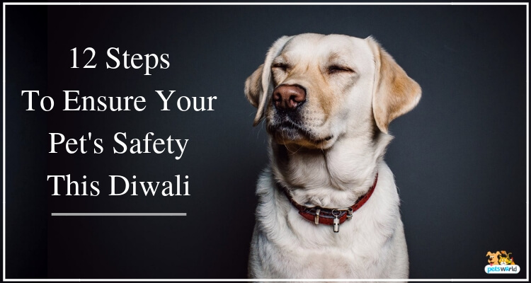 Steps To Ensure Your Pet's Safety This Diwali