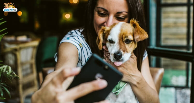 Top 8 Small Dog Breeds that Give the Best Dog Parenting Experience