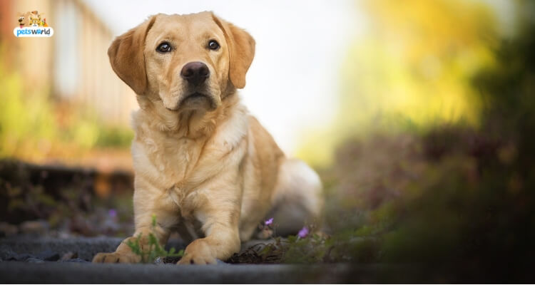 Get Affection and Love With These 5 Remedy Canine 2