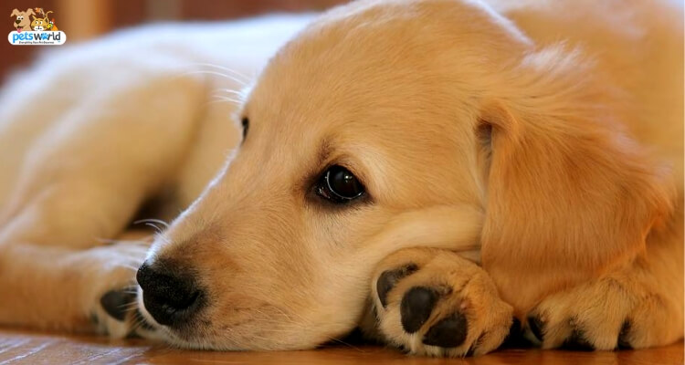 A Complete Guide To Treating Your Dog Suffering From Anxiety