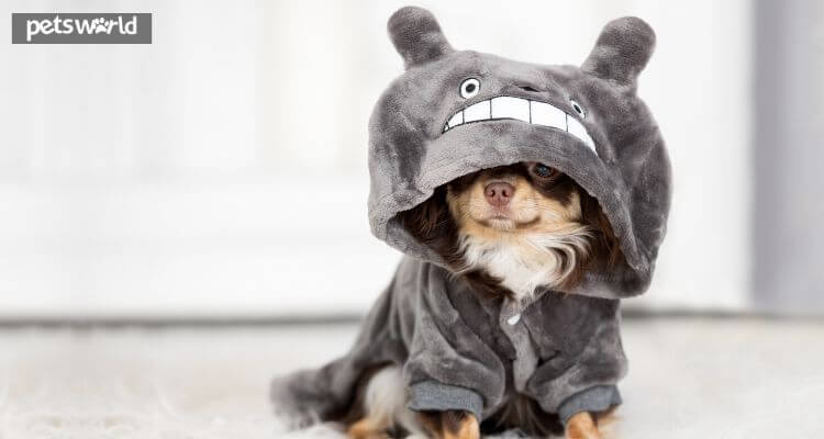 Find out how to Preserve Your Pets Protected & Cosy This Winter - Pets World 2