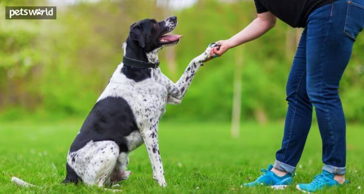 Why Dog Treats Are the Best When It Comes To Training