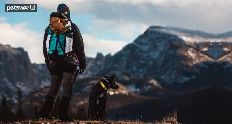 Issues to Know Whereas Going for a Hike With Your Canine 2