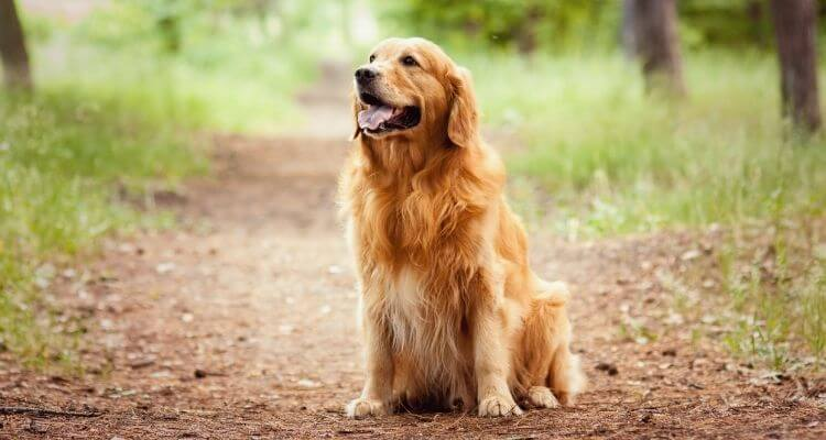 Finest Canine for Small Flats in India 5